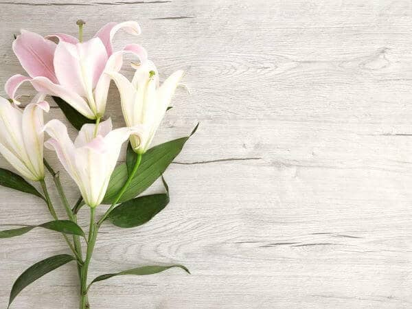 Bereavement Clearance Service From St Neots House Clearance